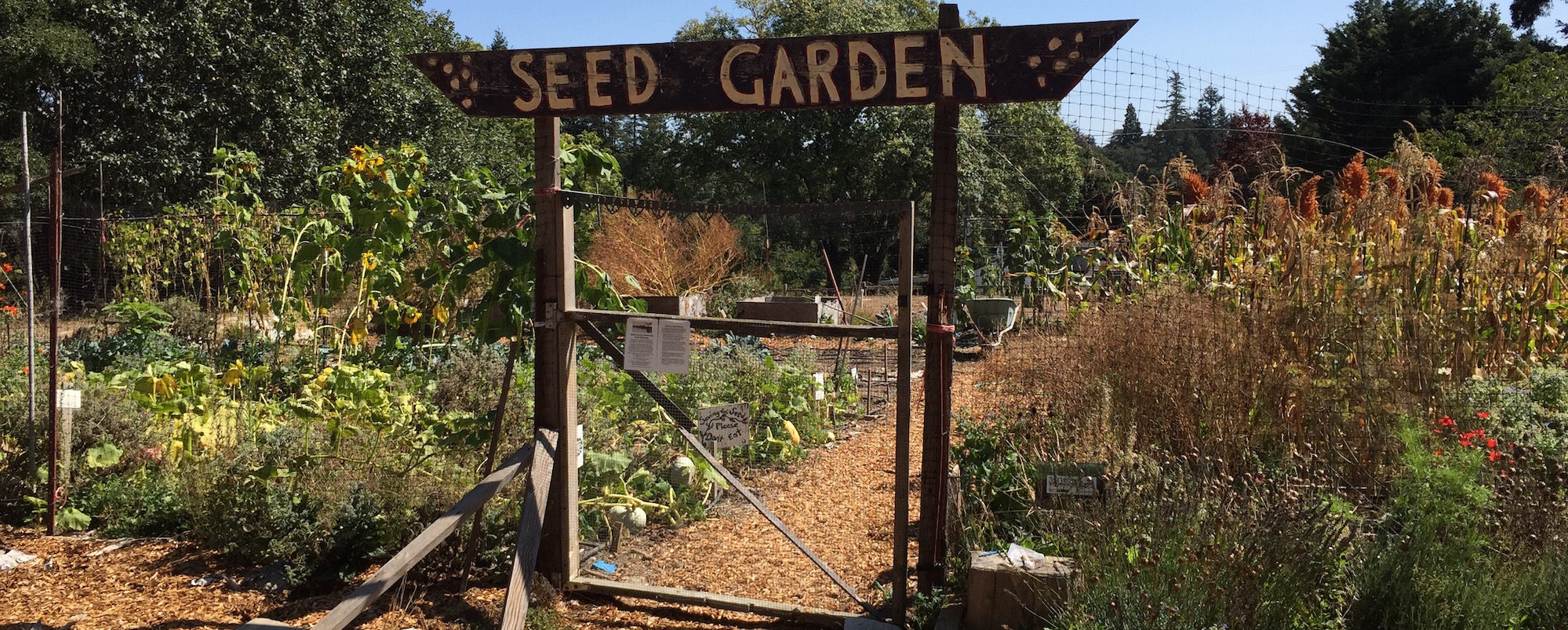 Festival – London Freedom Seed Bank
