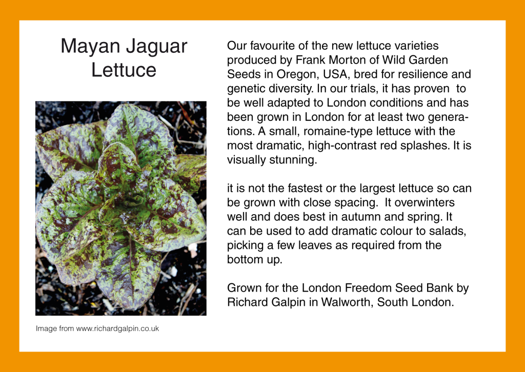 London Seeds – London Freedom Seed Bank